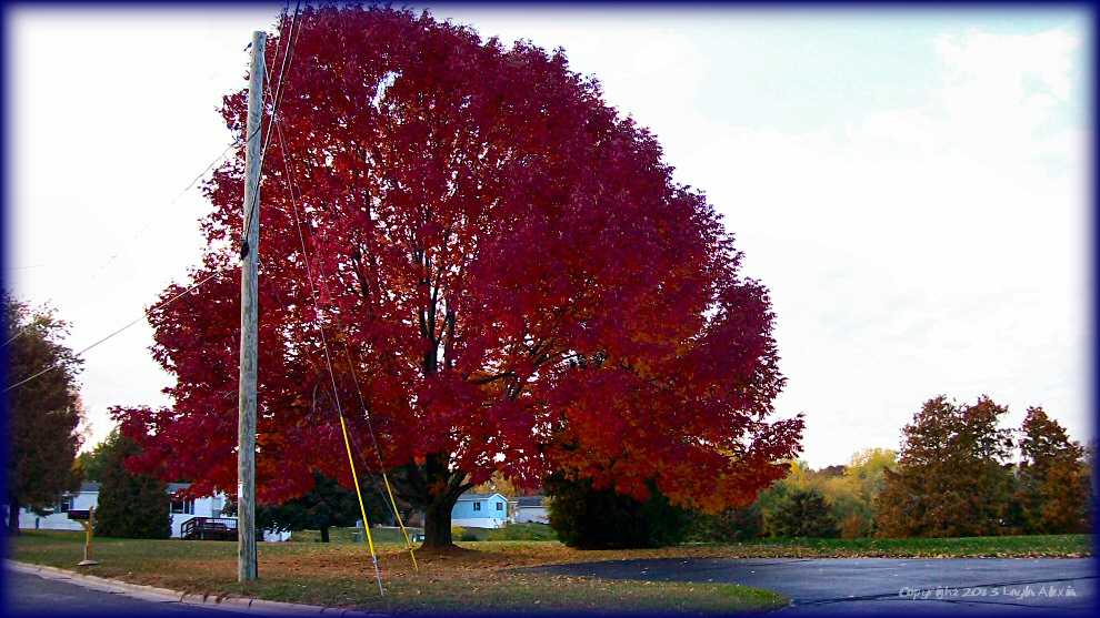 Brilliant Red Tree in Fall