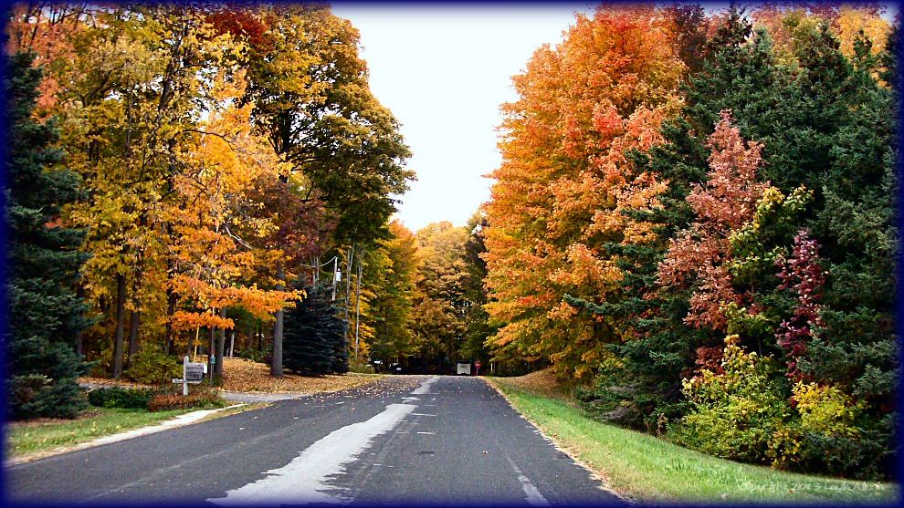Fall Trees overhanging road