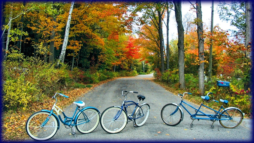 Bicycles on fall road